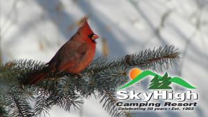 Sky High Camping Resort1